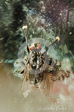 Nasty fly