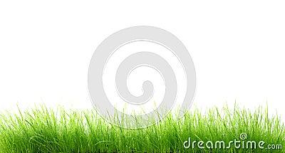 Nat gras