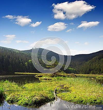 National Park Bavarian Forest - Germany
