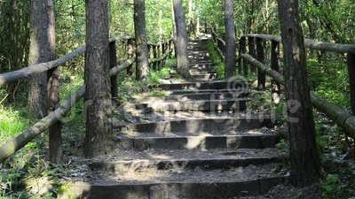 In the national park in Lubin, Poland. Forest with stairs to the view point of the green hill stock footage