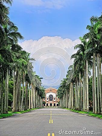 National Taiwan University - the Royal Palm Blvd.