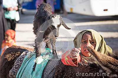 Native arabic woman donkey and goat Editorial Stock Photo