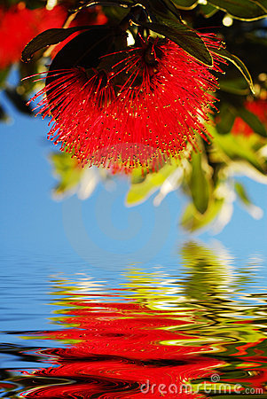 Free Native Flower Reflection Stock Photography - 4056912