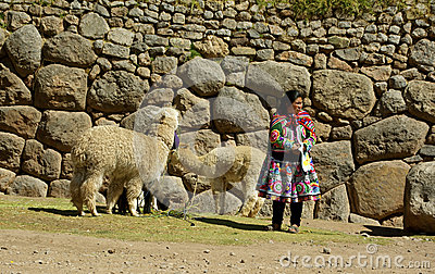 Native Woman from Peru with Lamas Editorial Image