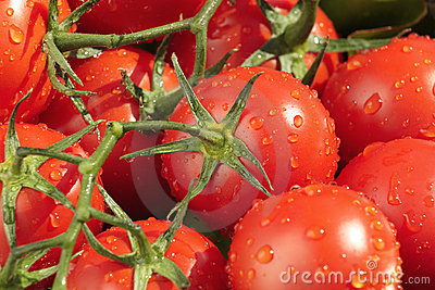Natte, verse tomaten