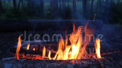 Nattläger med en ljus eld i skogen arkivfilmer