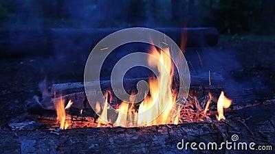 Nattläger med en ljus eld i skogen stock video