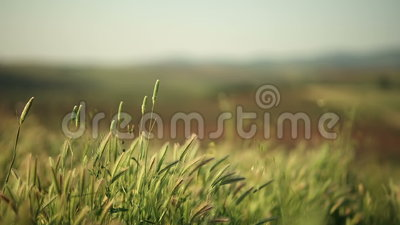 Natura ed il vento
