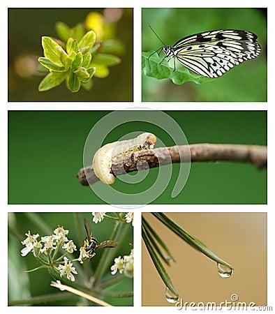 Natura set