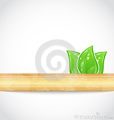 Natural background with eco green leaves and wood