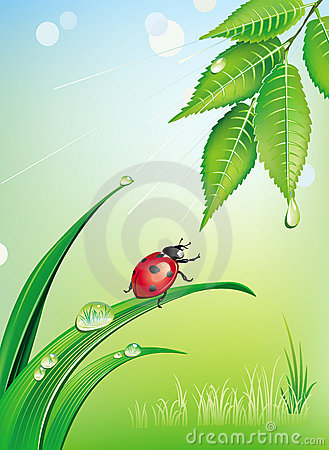 Natural Background With Ladybird Royalty Free Stock Photography - Image: 13971717