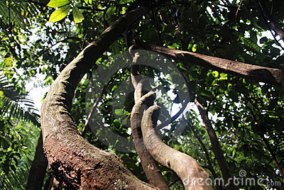 Natural curl of rain forest