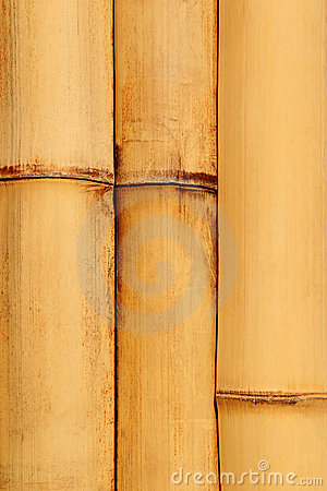 Natural detailed bamboo