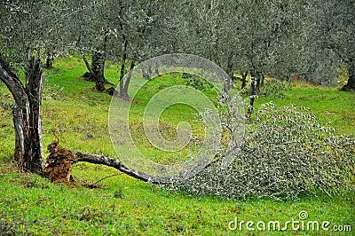 Natural disaster: broken trees
