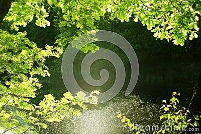 Natural frame forest