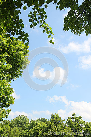 Natural frame of lime and maple leaves and trees, blue sky