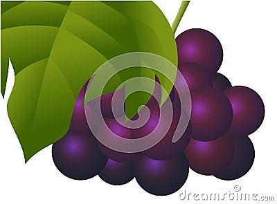 Natural Fresh Grape Fruit
