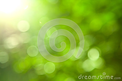 Natural green blurred background