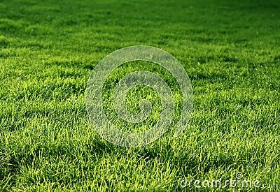 Natural green grass