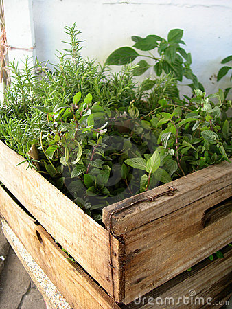 Natural herbs in a greenhouse