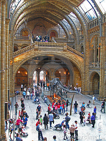 Free Natural History Museum Royalty Free Stock Images - 13983049