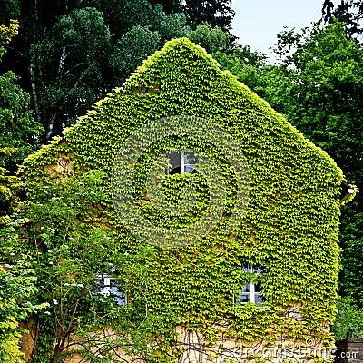 Natural insulation