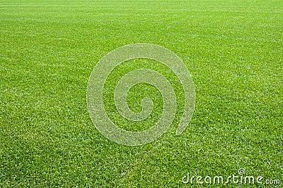 Natural lawn green grass texture