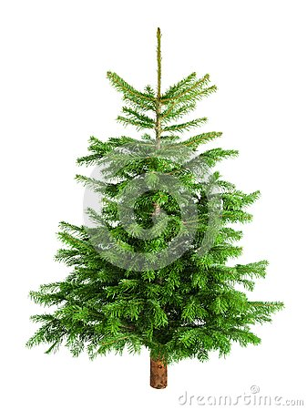 Free Natural Little Christmas Tree Without Ornaments Royalty Free Stock Photos - 35415628