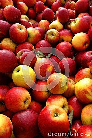Natural Organic Apples in Bulk at Farmer Market