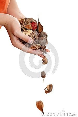 Free Natural Potpourri Royalty Free Stock Photos - 7054118