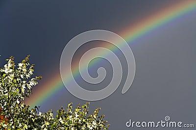 natural Rainbow
