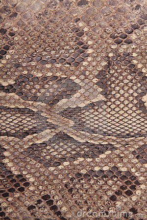 Natural skin of a python