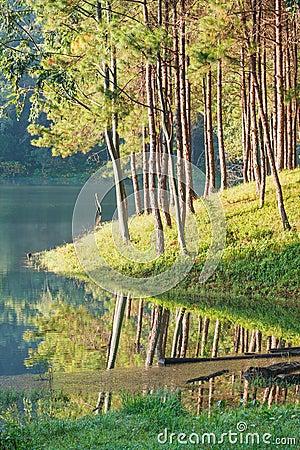 Natural Spruce Woodland