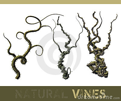 Natural vines
