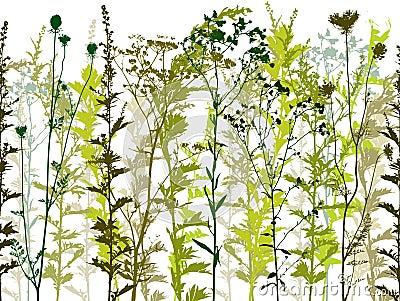 Natural wild plants.