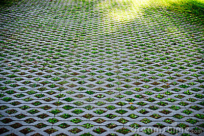 Nature Abstract Small Plants in Grid Pattern