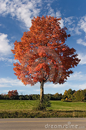 Free Nature Autumn Tree 01 Stock Photography - 305472