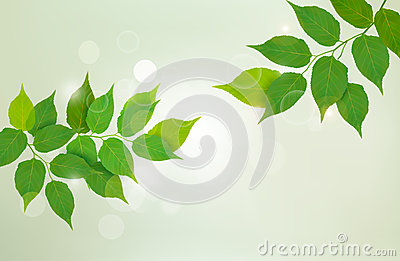 Nature background with fresh green leaves.
