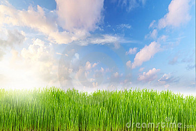 Nature background with perfect meadow