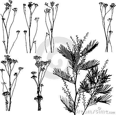 Nature Catalog I