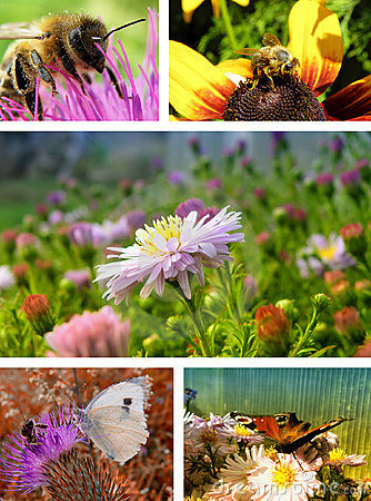 Free Nature Collage Royalty Free Stock Image - 14772176