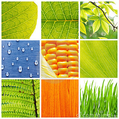 Free Nature Collage Royalty Free Stock Photography - 9817517