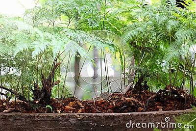 Nature of Ferns in garden