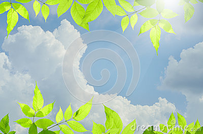Nature green background with over blue sky