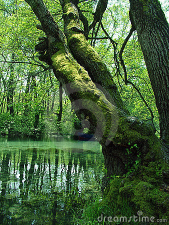 Nature - green swamp