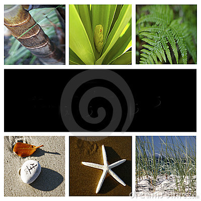 Free Nature Montage Royalty Free Stock Photography - 6167777
