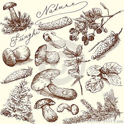 Free Nature - Mushrooms Royalty Free Stock Image - 23024516