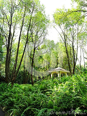Nature park tall trees and pavilion