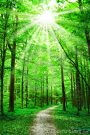Free Nature. Path In Forest With Sunshine Stock Photo - 8241130