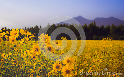 Nature Photography Of Sun Flowers Blooming Free Public Domain Cc0 Image